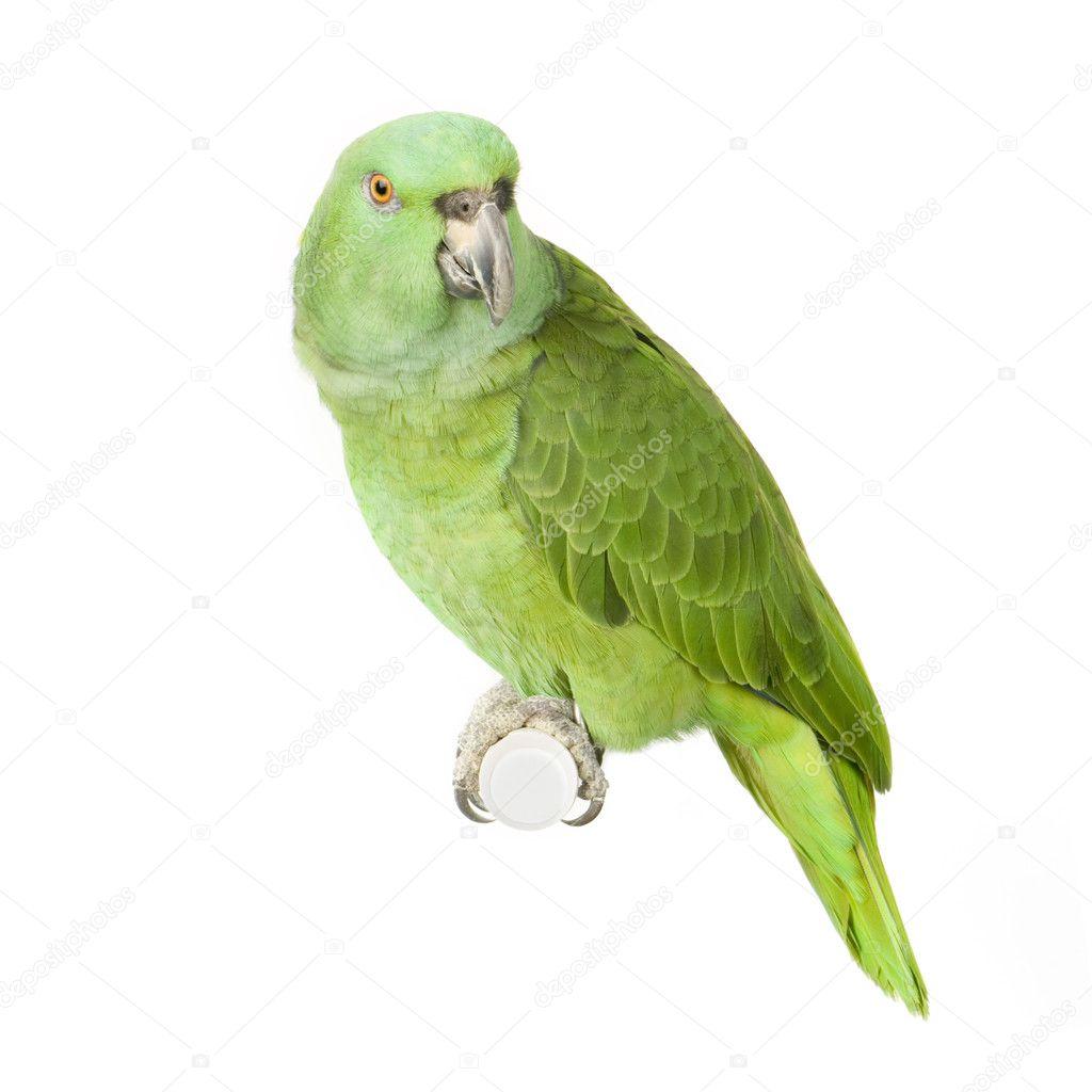 Эксклюзивный зеленый цвет кузова с продольными полосами из карбоновой пленки