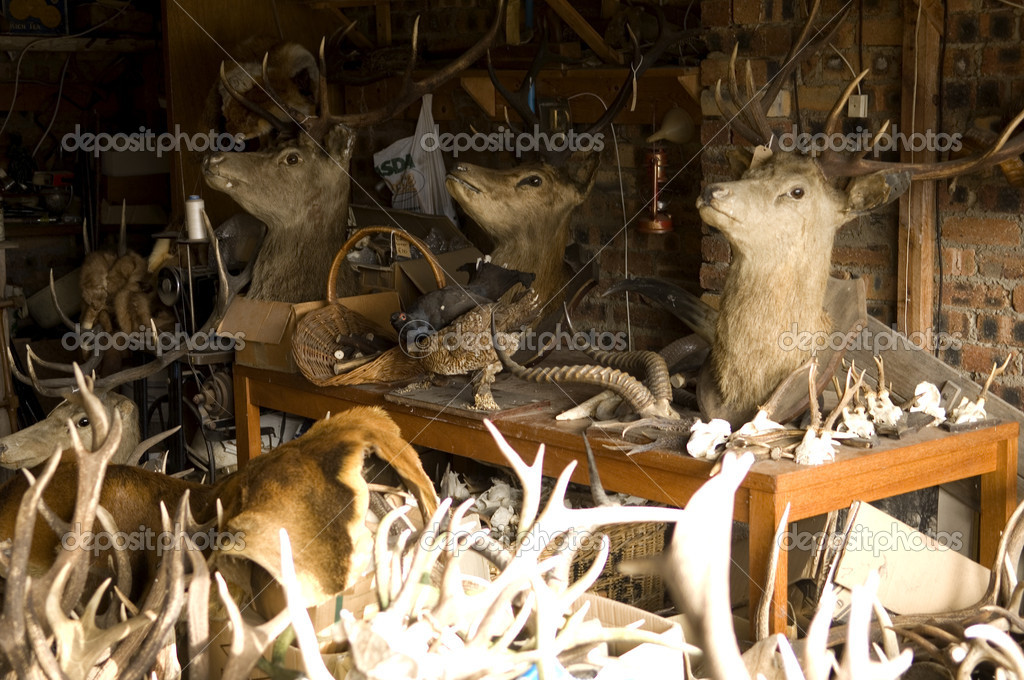 Some deer trophy's in a stuffer's workshop  Stock Photo #10864594