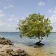 Isolated tree — Stock Photo #10870104