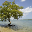 Isolated tree — Stock Photo #10870106