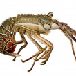 Stock Photo: Spiny lobster - Palinuridae