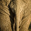 Elephant's skin - Stock Photo