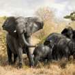 Elephant — Stock Photo #10875271