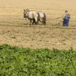 Horse working in the field — Stock Photo