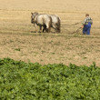 Horse working in the field - Stock Photo