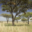 Stock Photo: Serengeti landscape