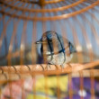 Bird in cage - Stok fotoraf