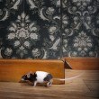 Mouse walking in a luxury old-fashioned roon — Photo