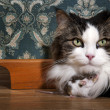 Cat and mouse in a luxury old-fashioned roon — Stock Photo
