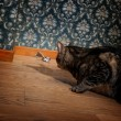 Cat and mouse in a luxury old-fashioned roon - Stok fotoraf
