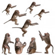 Many views of Baboon in differents size and position — Stock Photo