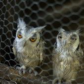 Bird in captivity — Stock Photo