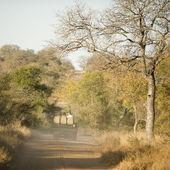 Дорога через Национальный парк Крюгер — Стоковое фото
