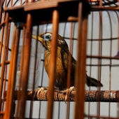 Bird in cage — Stock Photo