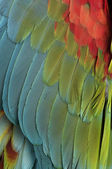 Close-up on feathers — Stock Photo