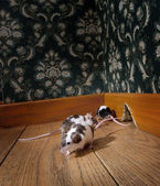 Group of mice walking in a luxury old-fashioned room — Stock Photo