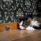 彼女の穴から出てくるマウスを見つめる猫 — ストック写真