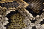 Close-up of Python regius' snakeskin — Stock Photo