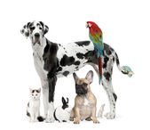 Group of pets - Dog,cat, bird, reptile, rabbit — Stock Photo