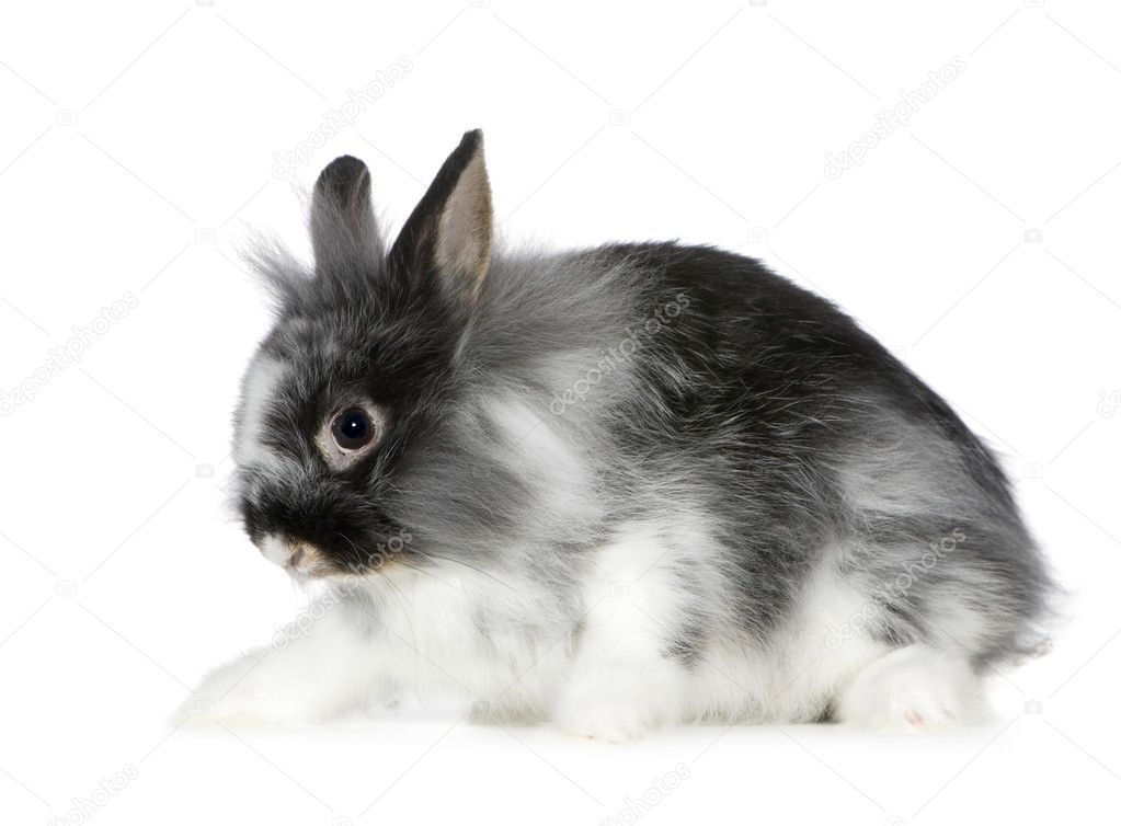Rabbit in front of a white background — Stock Photo #10872687