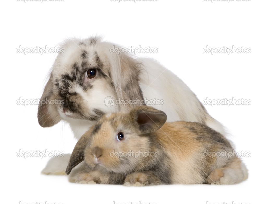 Rabbit in front of a white background — Stock Photo #10873118