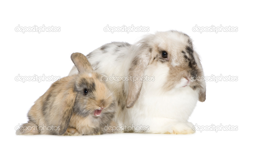 Rabbit in front of a white background — Stock Photo #10873134
