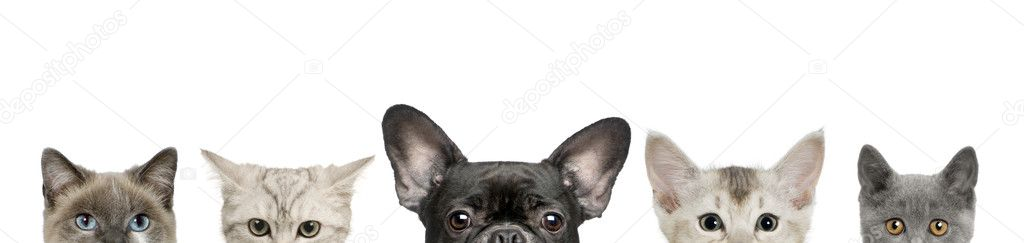 Backgrounds of Cats And Dogs Dog Head And Cat Heads in