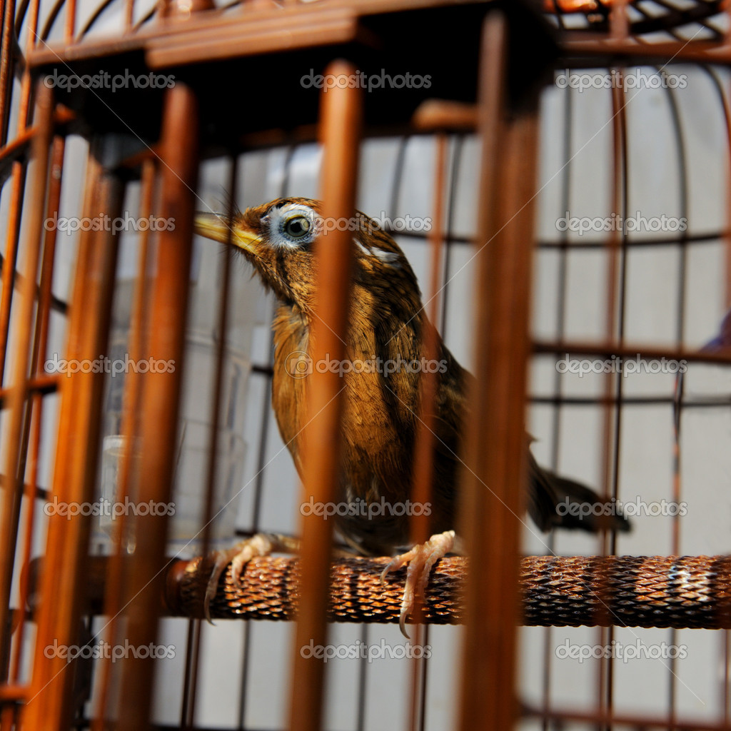 Bird in cage at the pet market of Hong Kong — Stock Photo #10877756