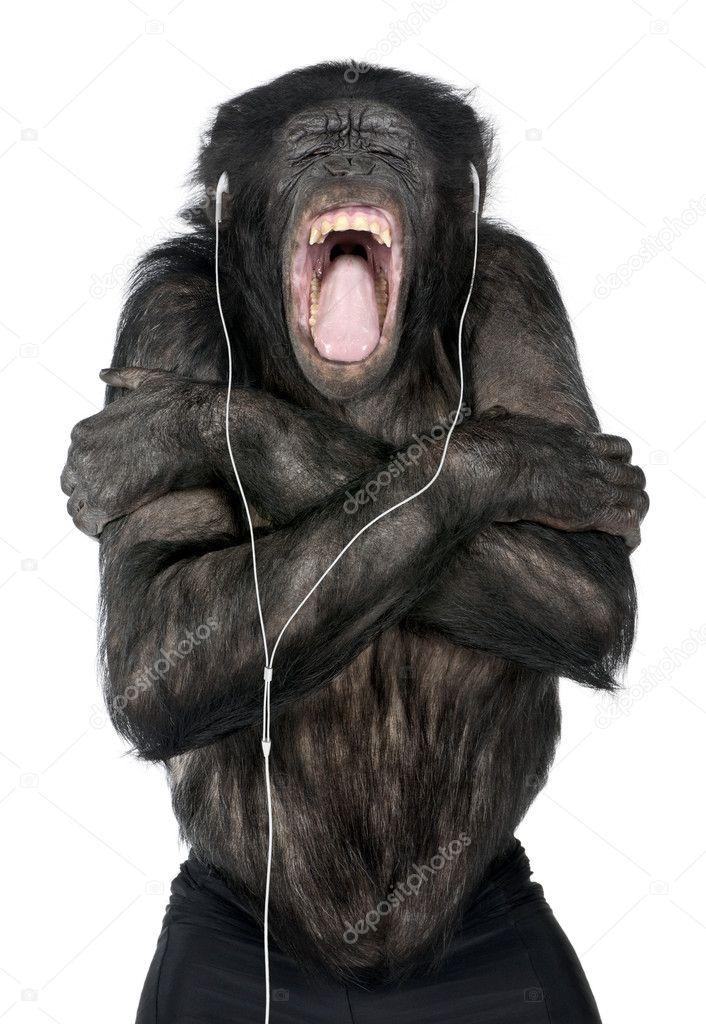 the dissertation monkey