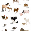 Collage of farm animals in French in front of white background, — Stock Photo #10880333