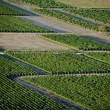 Stock Photo: Aerial view of vineyards