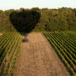 Shadow of a hot air balloon over field - Stock Photo
