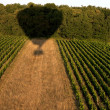 Shadow of a hot air balloon over field - 图库照片