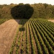 Shadow of a hot air balloon over field - Foto de Stock