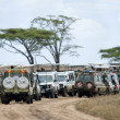 Vehicles on safari in Serengeti National Park, Serengeti, Tanzania, Africa - 图库照片
