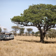Vehicles on safari in Serengeti National Park, Serengeti, Tanzania, Africa - Stok fotoğraf
