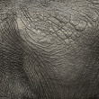 Close-up on an elephant hide — 图库照片
