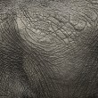 Close-up on an elephant hide — Stock Photo