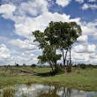 Landscape with cloudy blue sky and tree, Tanzania, Africa - Стоковая фотография