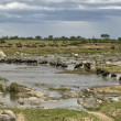 Wildebeest crossing the river in the Serengeti, Tanzania, Africa - Foto Stock