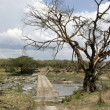 Tree and wooden crossing in the Serengeti, Tanzania, Africa - Stock Photo