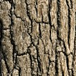 Close-up of tree bark — Stock Photo