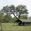 Stock Photo: Tent in Serengeti National Park, Serengeti, Tanzania