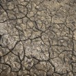 Textured dry ground of a salt lake — Stock Photo #10885145