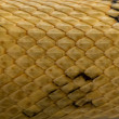 Постер, плакат: Close up of Trans Pecos rat snake scales Bogertophis subocularis