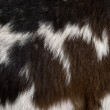 Close-up of Rove goat fur, full frame — Stock Photo #10888518