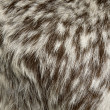 Close-up of Rove goat fur, full frame — Stock Photo