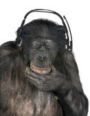 Monkey listening music closed eyes — Stock Photo