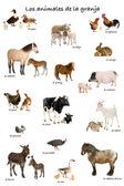 çiftlik hayvanları-i̇spanyolca-beyaz arka plan önünde kolaj, — Stok fotoğraf