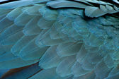 Close-up of Blue-and-yellow Macaw's feathers, Ara ararauna — Stock Photo